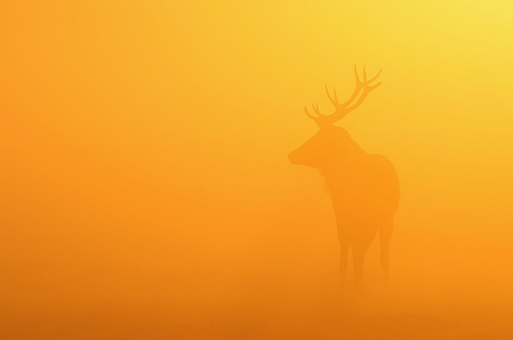 Week in wildlife: The Autumn Deer Rut In London's Richmond Park