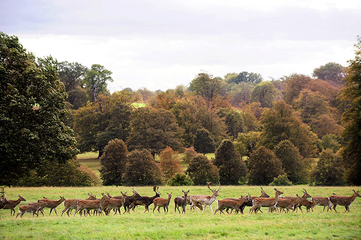 Week in wildlife: Deer at Studley Royal