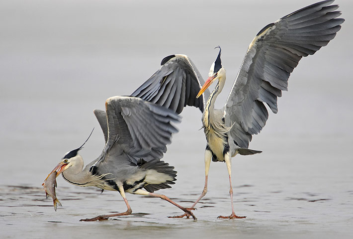 Week in wildlife: 'Birds: Magic Moments' by Markus Varesvuo - 2011
