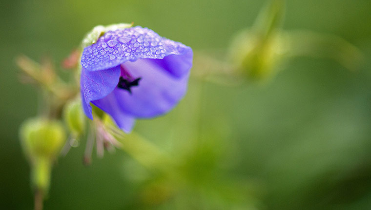 Week in wildlife: A flower is covered in dewdrops