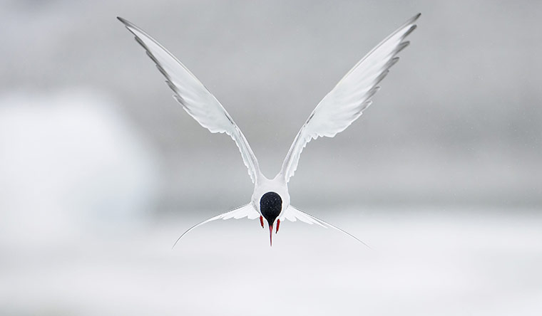 Week in wildlife: 'Birds: Magic Moments' by Markus Varesvuo