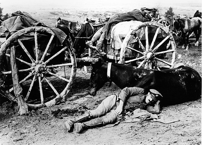 Animals in war: A soldier resting against his horse in WW1