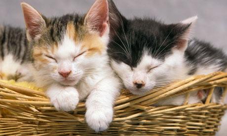A basket of kittens