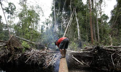Rainforest deforestation in Indonesia