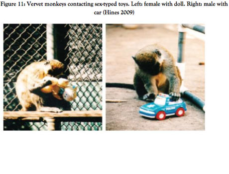 Monkeys playing with toys
