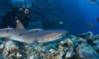 Trail Great Barrier Reef: