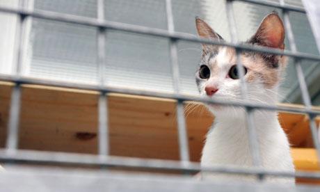 Cat Quarantine Us To Uk