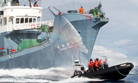 Yushin Maru No. 3 and Sea Shepherd activists
