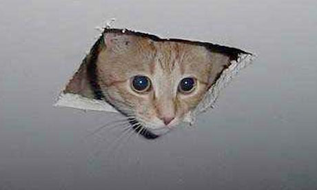 Ceiling cat... always watching you