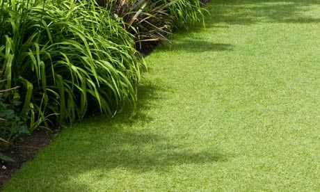 Garden week: Lawns