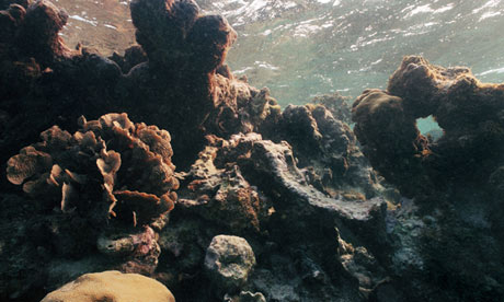 Bleached coral reef off C 007 Marine Life dying coral