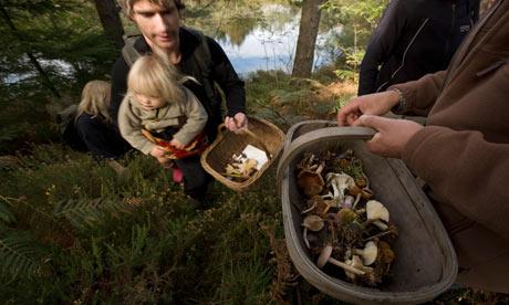 کسب درآمد از قارچ ها و میوه های وحشی جنگل