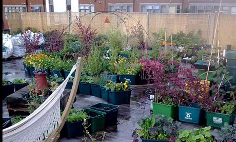 The supermarket growing food on its roof environment for Terrace kitchen garden ideas