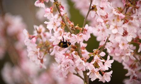 pollen-bee-wisley