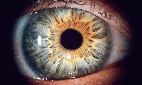 Human-eye-008.jpg (460×276)