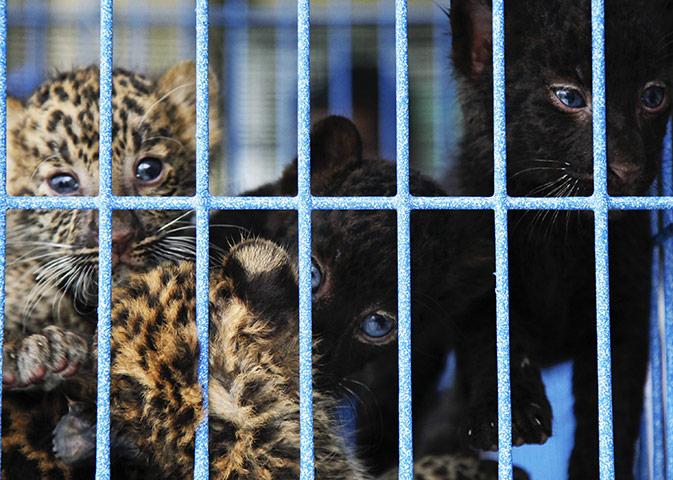 Des bébés animaux trouvés dans des bagages à Bangkok