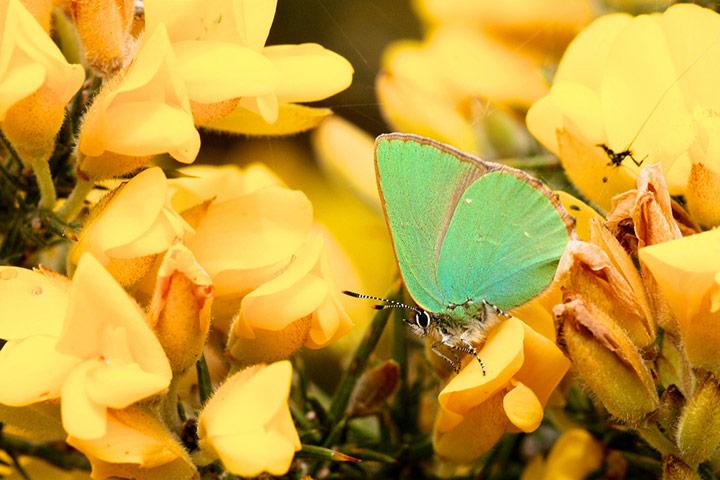 Butterfly reader photos o 009 - Beautiful Butter Flies Green shoots photographs