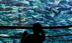 shoal of fish in a huge aquarium