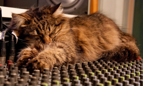 Cat on Mixing Desk by Mourner