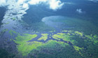 Aerial shot of the Amazon forest