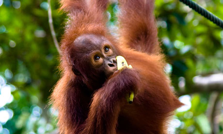 Palm oil labelling in Australia could become a reality if bill passes