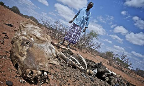 Bishar Hassim stands over a dead cow in Jowhar village, in Wajir, Kenya