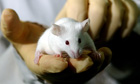 Medical research warning over human cells in animals