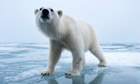 polar bear trade ban