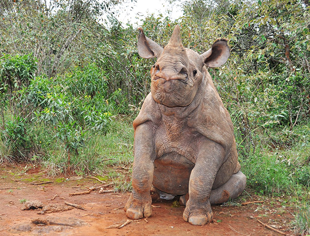 Week in pics: Davis: baby black rhino
