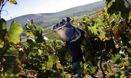 South African vineyard worker