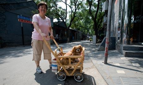Στις πόλεις της Κίνας αποδεκατίζουν τα αδέσποτα.....
