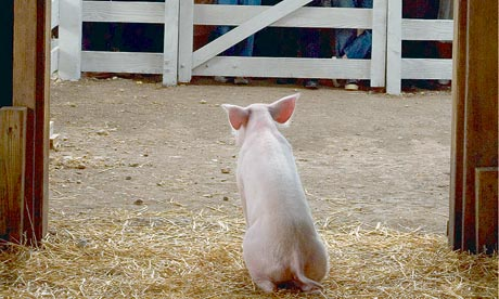 Wilbur the pig in the film of Charlotte's Web