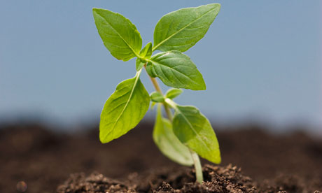 Close up of seedling.