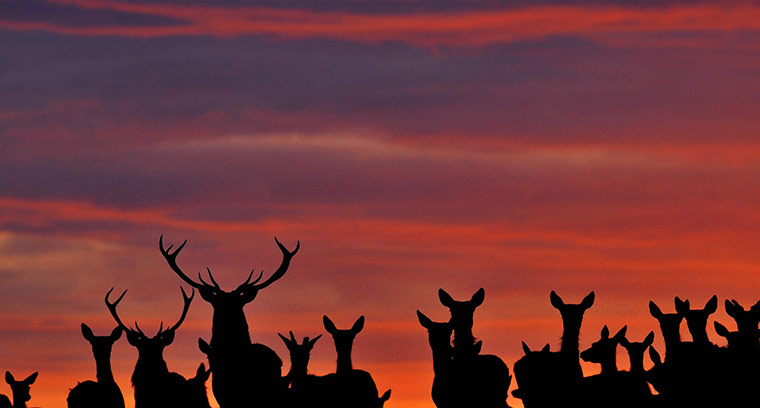 week in wildlife: Deer Herd stands in County Durham