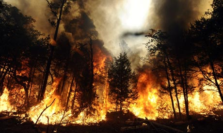 A wildfire burns out of control in Bastrop State Park near Bastrop, Texas