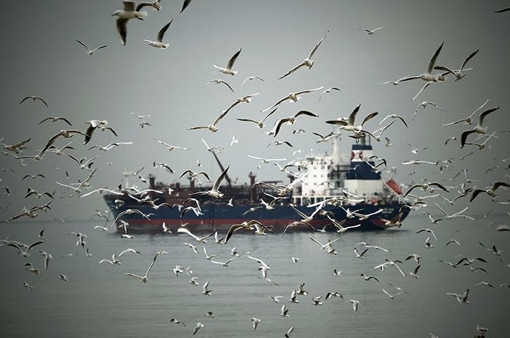 Дора, Ливан: стая чаек преследует нефтяной танкер