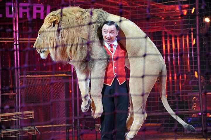 Укротитель львов Владислав Гончаров выступает со львом