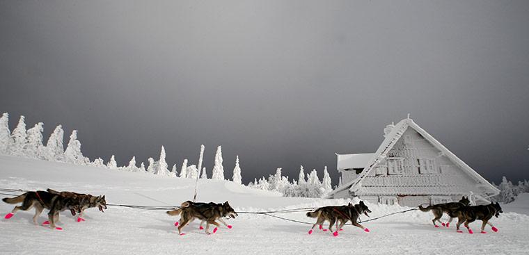 В Чехии стартовала самая трудная гонка на собачьих упряжках в мире