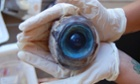 Look out! A huge eyeball has washed up on a beach in Florida. Marine biologists have yet to identify the species from which the eyeball came.