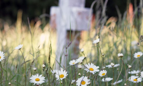 Daisies in a graveyard