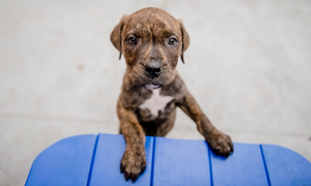 Puppy Wilfred and his three siblings were dumped in a bag when they were just a few weeks old. New figures released today show numbers of unwanted litters are reaching epidemic levels, Blue Cross pet charity is calling on owners to neuter their pets.