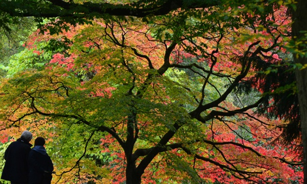 Natural colors: Visitors view changing autumn leaves at the Westonbirt Arboretum in southwest England.