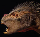 'Fanged vampire parrot' identified as new species of dinosaur