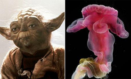 Yoda sea creature