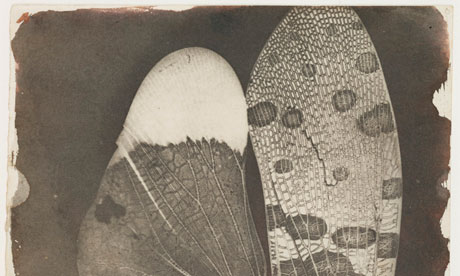Calotype negative of Insect wings