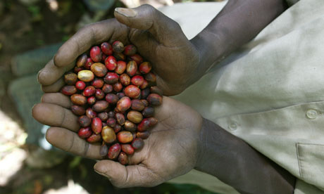 Ethiopian coffee farmer with beans