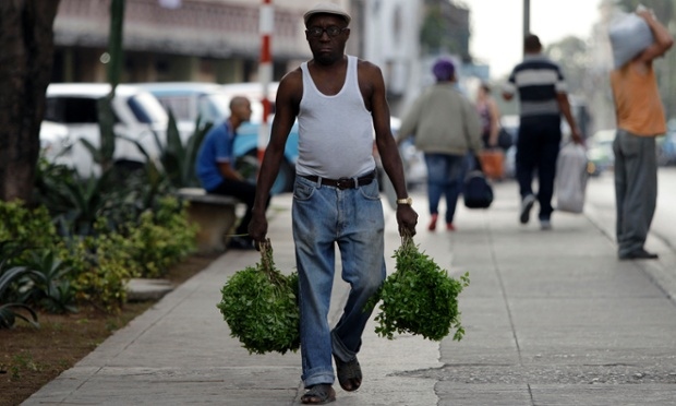 Cuba libre: A man carries basil herbs as he walks in Havana, Cuba. The U.N. General Assembly voted overwhelmingly to condemn the U.S. commercial, economic and financial embargo against Cuba for the 21st year in a row. The embargo was first enacted in 1960 following Cuba's nationalization of properties belonging to U.S. citizens and corporations.