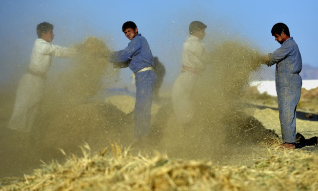 Whole lotta shakin' goin' on: Yemeni farmers winnow wheat with the wind to separate grain from impurities at a village on the outskirts of Sana'a, Yemen. Many Yemenis depend on agriculture for their livelihoods. Photograph: Yahya Arhab/EPA