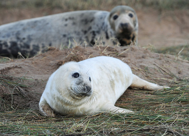 24 hours in pictures: Seals at Donna Nook Nature Reserve