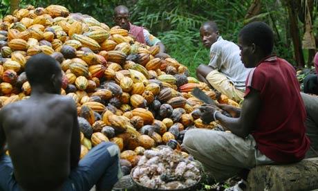 Ivory Coast - Cocoa